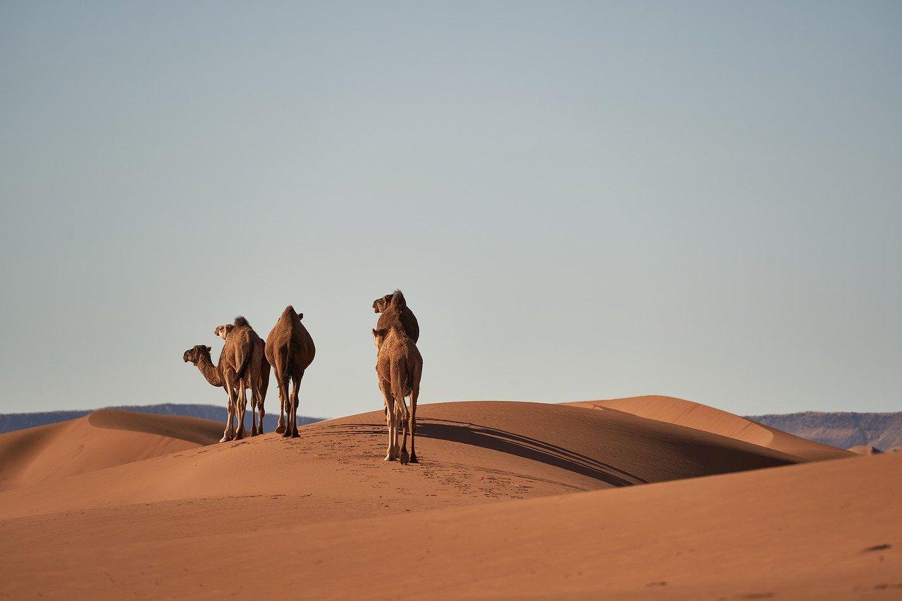 Czy prawdziwych Berberów już nie ma?